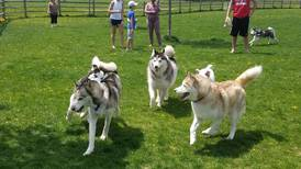3 Must-Visit Dog Parks on Route 66!